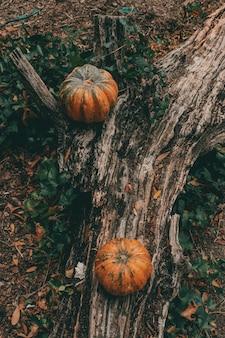 Una vista dall'alto verticale di due zucche su un tronco d'albero su un suolo della foresta di autunno