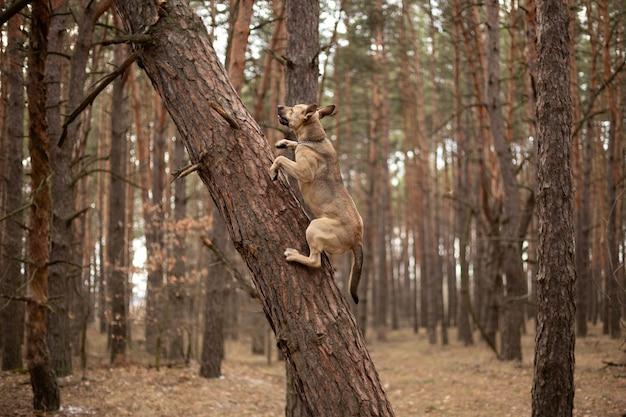 Un cane molto forte che si arrampica sugli alberi.