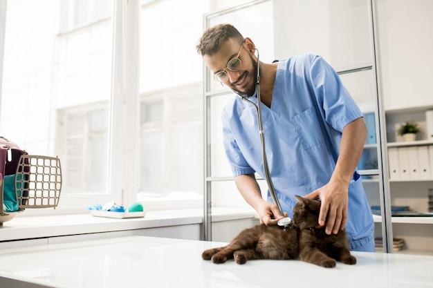 Veterinario esaminando il gatto