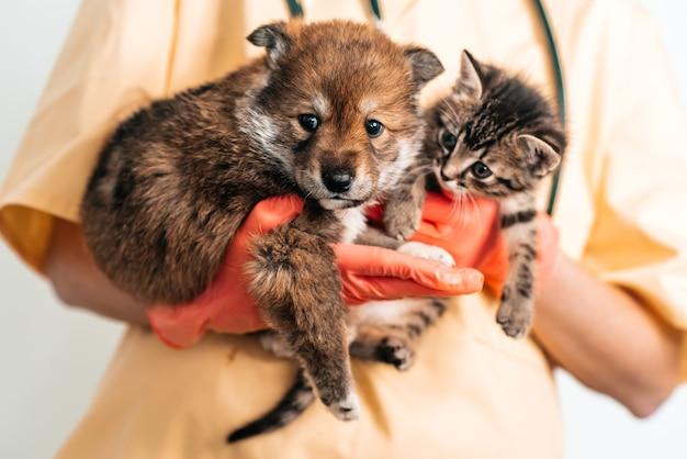 Veterinario che esamina cane e gatto. cucciolo e gattino al medico veterinario. vaccinazione per animali domestici.
