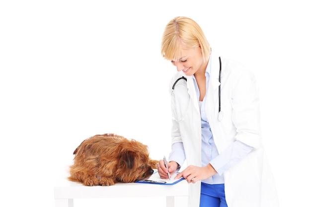 Un veterinario che scrive prescrizione per un cane su sfondo bianco