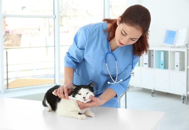 Veterinario che lava i denti del gatto con lo spazzolino da denti nella clinica degli animali