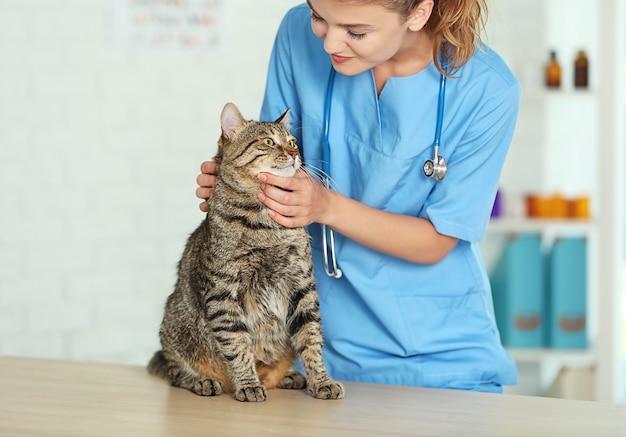 Medico veterinario che controlla il gatto in una clinica veterinaria Foto Premium