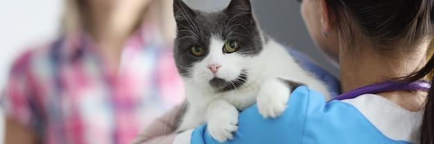 Il medico veterinario tiene il gatto tra le braccia
