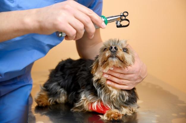Veterinario esaminando l'occhio del cane tramite oftalmoscopio.