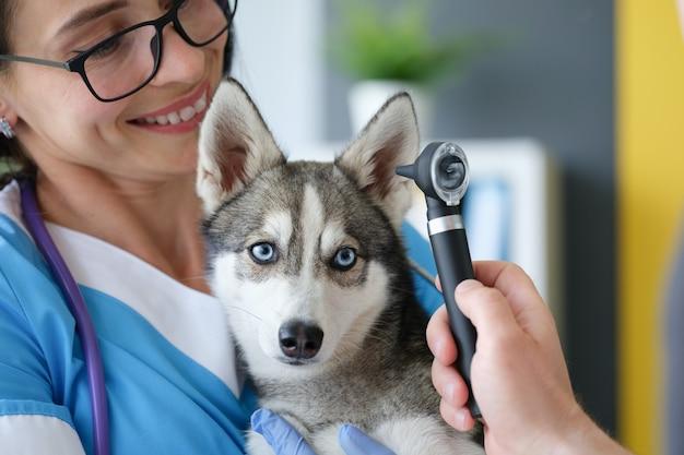 Veterinario che esamina l'orecchio dolorante del cane utilizzando l'otoscopio in clinica
