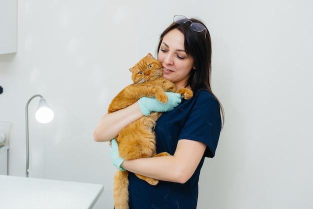 Veterinario che tiene un gatto dello zenzero
