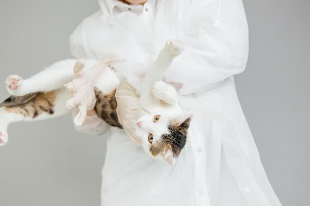 Il veterinario tiene in mano un gatto