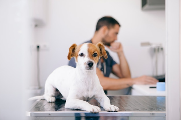 Maschio veterinario preoccupato per l'analisi del cane