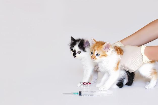 Mani professionali veterinarie che tengono due gattini per la vaccinazione