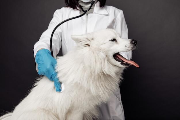 Veterinario con stetoscopio controlla il cane bianco sul tavolo in clinica veterinaria.