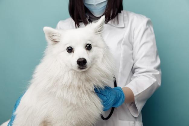 Veterinario con lo stetoscopio che ascolta il cane bianco sul tavolo in clinica veterinaria. concetto veterinario.