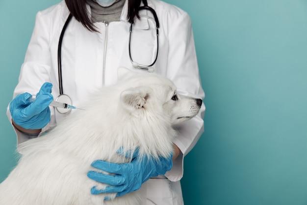 Veterinario con siringa e cane bianco sul tavolo in primo piano della clinica veterinaria.