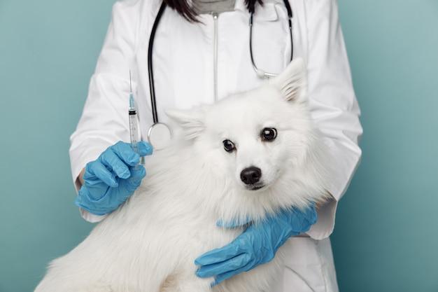 Veterinario con siringa e cane bianco sul tavolo in clinica veterinaria. concetto veterinario.