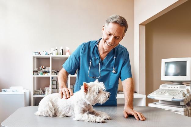 Veterinario in uniforme da lavoro che accarezza il suo paziente prima di iniziare il controllo completo presso la clinica veterinaria