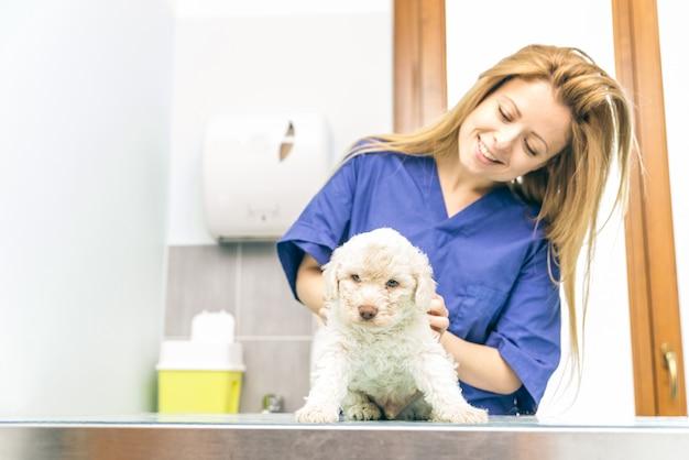 Veterinario che controlla un cucciolo di cane