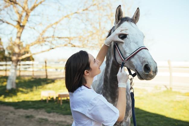 Cavalli veterinari nell'azienda agricola che conduce una revisione in un occhio.
