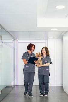 Professionisti veterinari in clinica. concetto veterinario.
