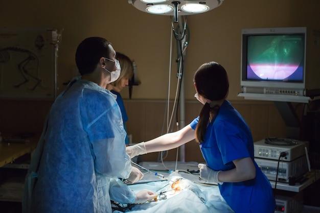 Veterinari che fanno un intervento chirurgico in clinica.