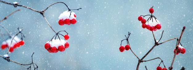 Cespuglio di viburno con grappoli coperti di neve di bacche rosse durante la nevicata, sfondo natalizio invernale