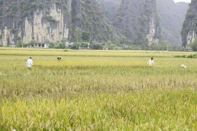 Agricoltori vietnamiti e pescatori nei villaggi rurali.