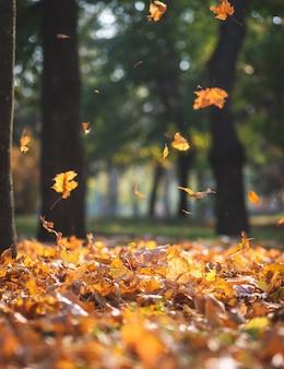 Vista del parco della città di autunno con alberi e foglie gialle secche