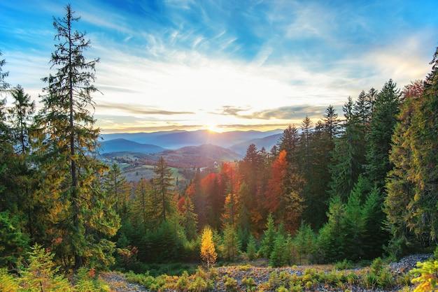 Vista del bellissimo paesaggio nel prato di una collina con il sole che sorge sullo sfondo. sole mattutino che illumina le dolci colline con raggi di luce. concetto di natura e ambiente.