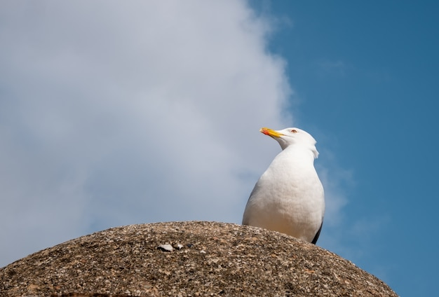 Vista di un bellissimo gabbiano sul cielo azzurro e bianco