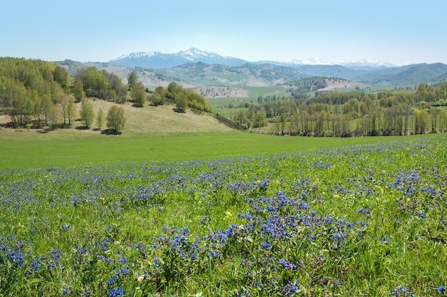 Vista di un prato primaverile in fiore, paesaggio di montagna in una giornata di sole