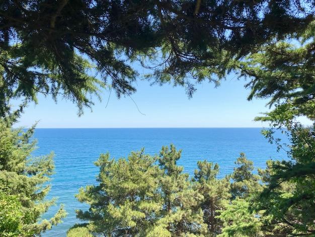 Vista del mare blu attraverso i rami degli alberi in una giornata di sole estivo