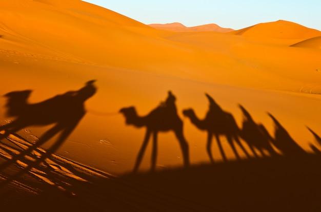Vista della carovana che viaggia e ombre dei cammelli sulla duna di sabbia nel deserto del sahara