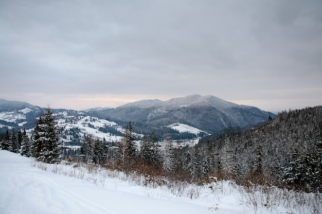 Visualizza le montagne dei carpazi. avvicinamento. natura invernale. cadute di forti nevicate. paesaggio. panorama.