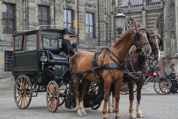 Vista di una carrozza con cavalli e gli edifici storici di amsterdam, paesi bassi