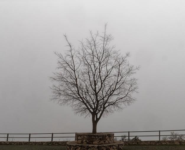 Vista dell'albero morto con uno sfondo nebbioso.