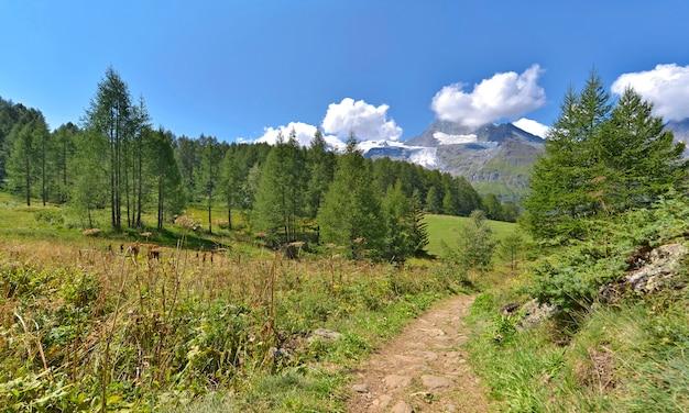Vista su un sentiero che attraversa un parco nazionale francese alpino
