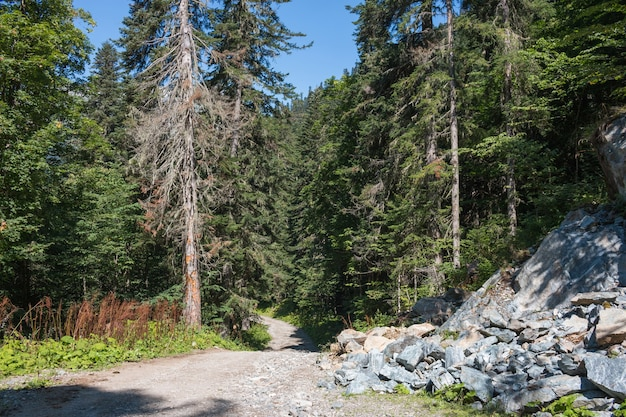 Visualizza le scene della foresta nel parco nazionale dombai, nel caucaso, in russia, in europa. paesaggio estivo, tempo soleggiato, cielo azzurro drammatico e giornata di sole