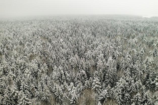 Vista dall'alto del bosco invernale con alberi innevati in inverno.