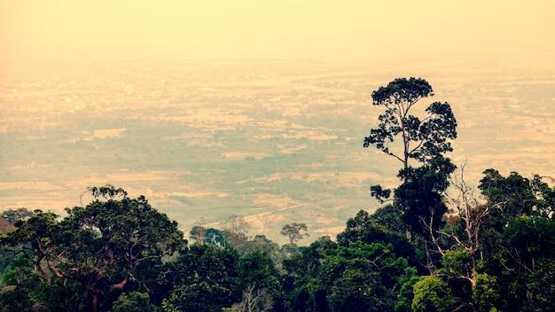 Vista dalla montagna di phnom bokor alla città di kampot in cambogia con piante e alberi in primo piano