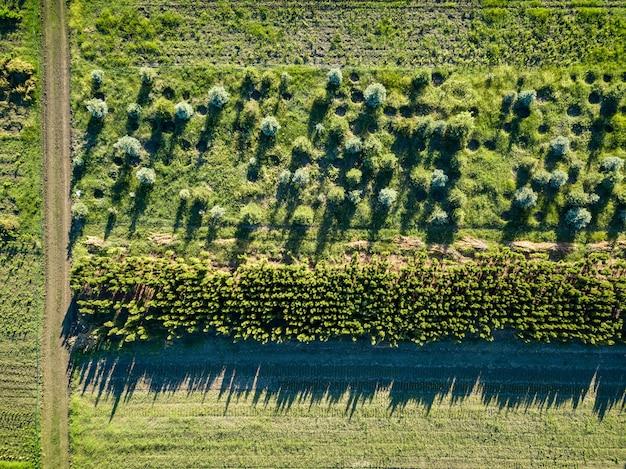 Una vista dall'alto sul territorio dove si coltivano giovani alberi per la piantumazione e il giardinaggio di città e parchi con strada per auto. foto di drone