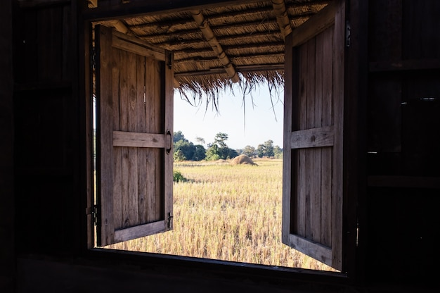 Vista dalla finestra in un meraviglioso paesaggio naturale vista stoppie di riso lasciate dopo aver raccolto lo sfondo della natura del campo di riso in thailandia