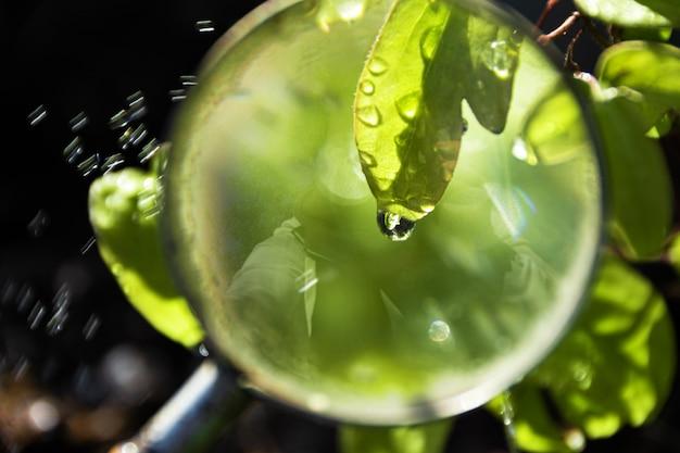 Vista della foglia verde con goccia di acqua in lente d'ingrandimento al giardino della molla