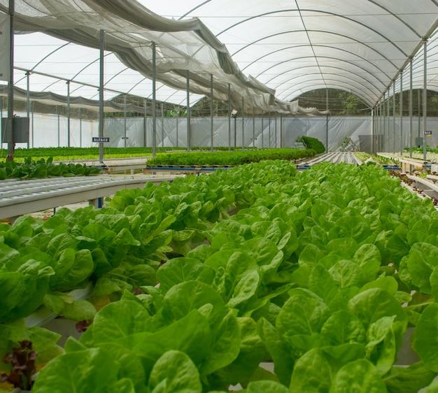 Vista di una fattoria di lattuga idroponica
