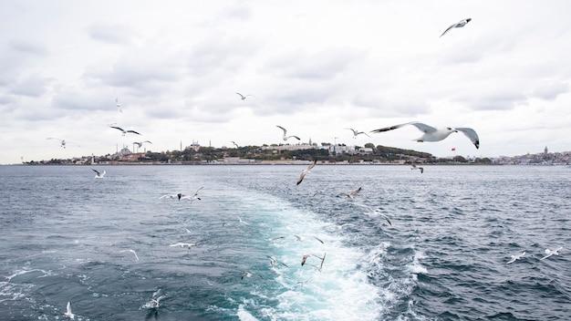 Vista di istanbul da una nave con tempo nuvoloso, gabbiani in volo, onde e schiuma come una traccia dalla barca, turchia