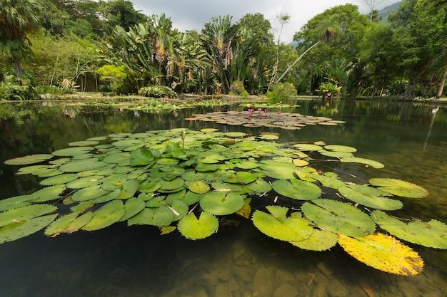 Vista del lago nel giardino botanico di rio de janeiro in brasile.
