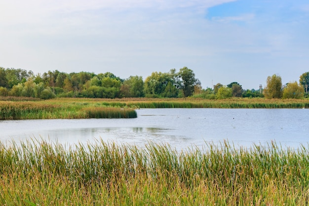 Vista sul lago con rive ricoperte di canne. paesaggio del lago al mattino di sole autunnale