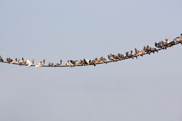 Vista di molti piccioni su un filo di elettricità curvo.