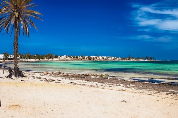 Vista della costa mediterranea con mare turchese, sabbia bianca e una palma