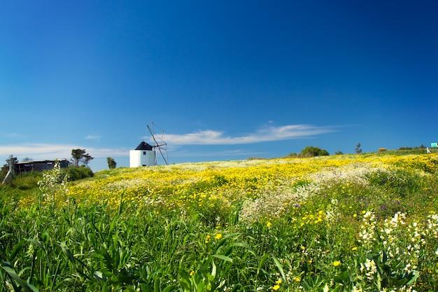 Osservi il mulino nel campo con i fiori, portogallo