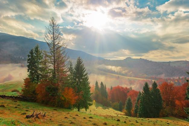 Vista di alba foresta di montagna con drammatico cielo nuvoloso sullo sfondo.