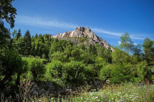 Vista del picco di montagna sotto la foresta e il campo dei fiori.
